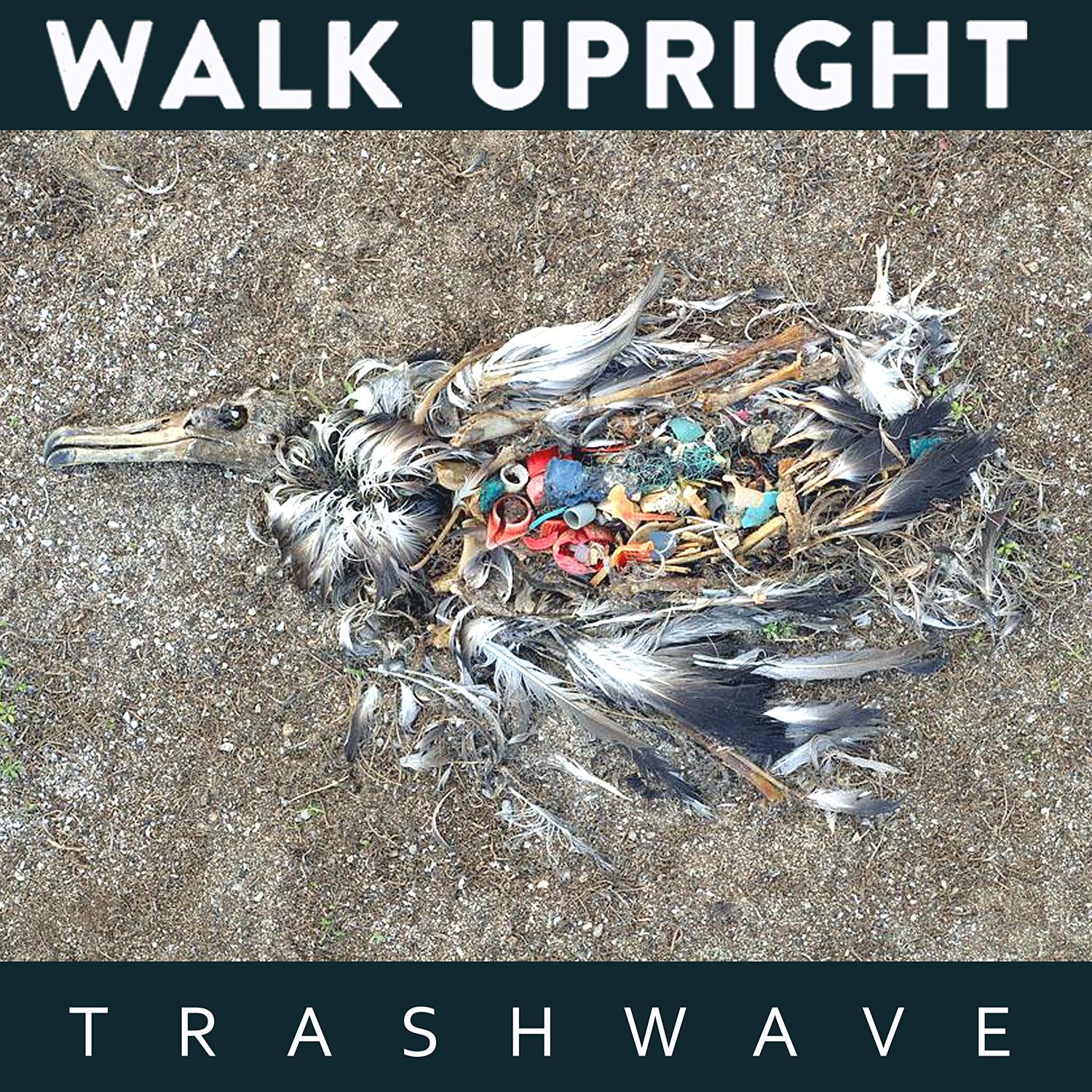 Walk Upright - Trash Wave (Cover)